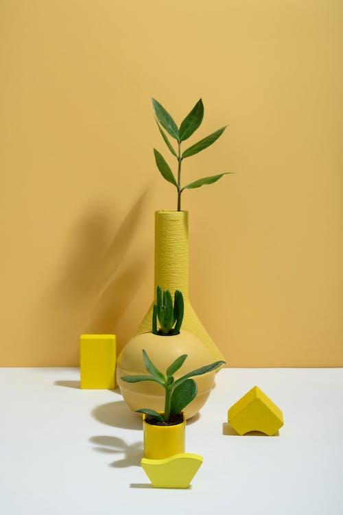 Immagine gratuita di arte, botanico, crassula