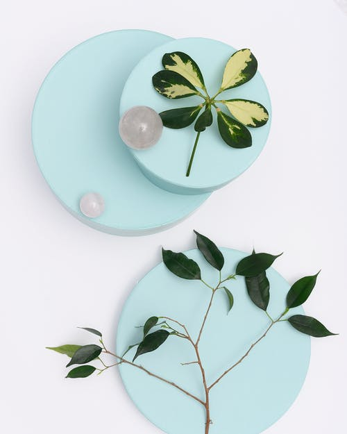 Photo of Green Leaves on Top of Light Blue Round Objects