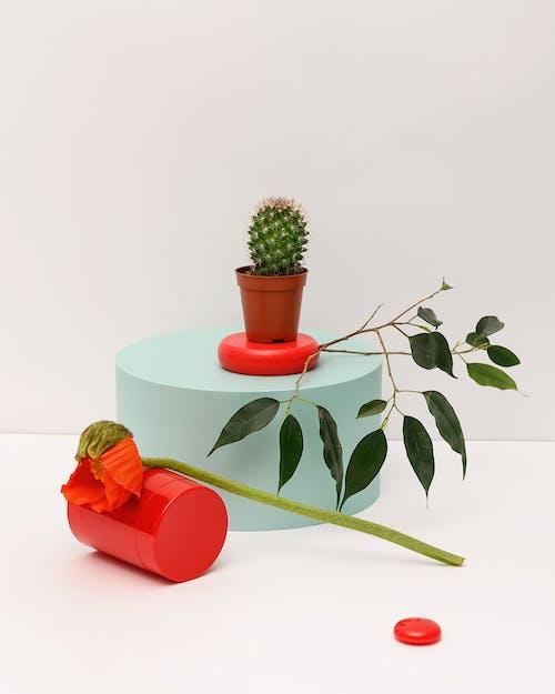 Photo of Plants on White Background