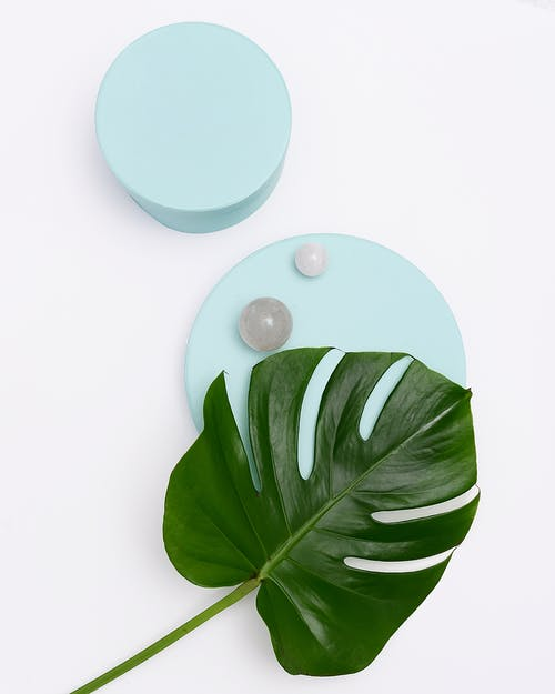 Photo of Monstera Leaf on Round Objects