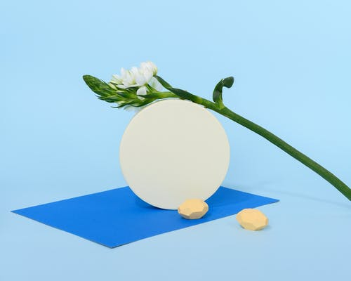 Photo of White Flower on Top of Round Object