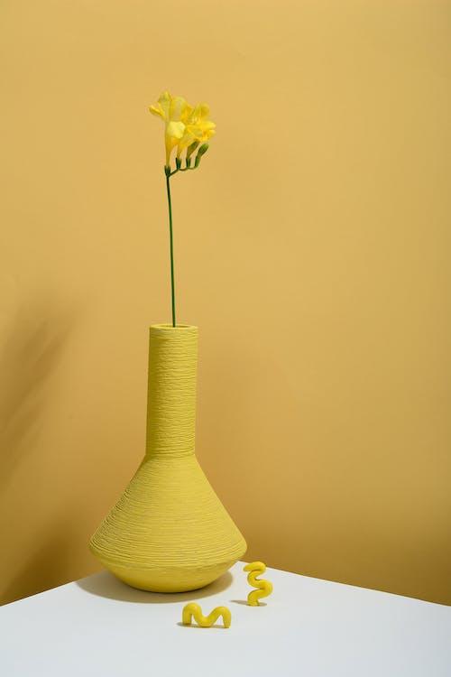 Photos gratuites de arrière-plan jaune, botanique, brillant