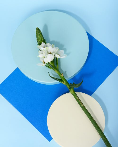 Kostenloses Stock Foto zu begrifflich, blume, blütenblätter