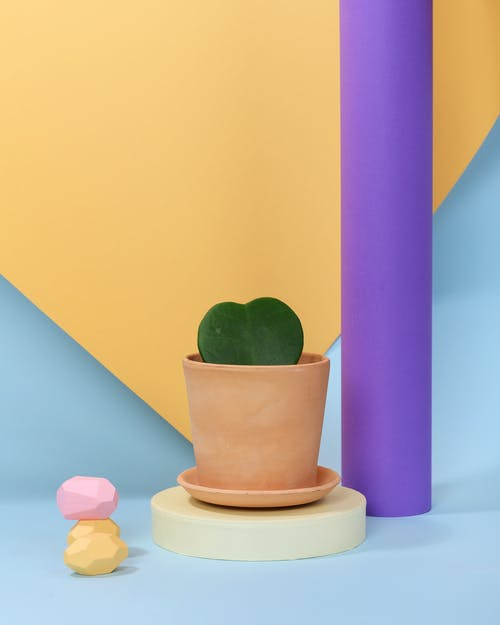 Photo of Succulent Plant on Top of White Round Object