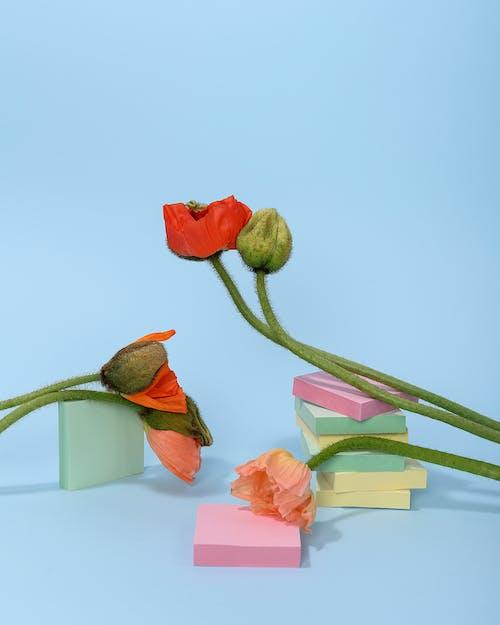 Photo of Orange Poppy Flowers Leaning on Squeare Blocks