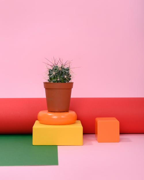 Photo of Cactus Plant on Small Brown Pot