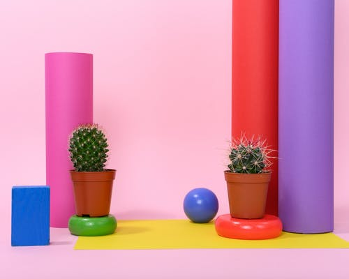 Photo of Succulent Plants on Top of Round Objects