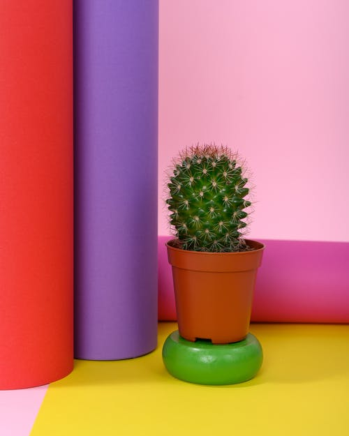Photo of Succulent Plant on Small Pot