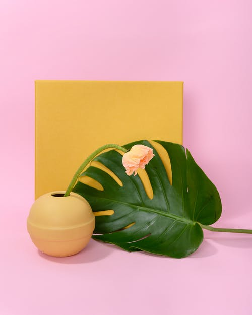 Photo of Pink Flower Beside Mosntera Leaf