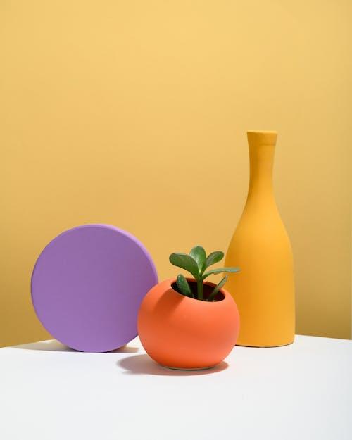 Photo of Succulent Plant on Orange Ball-Shaped Pot