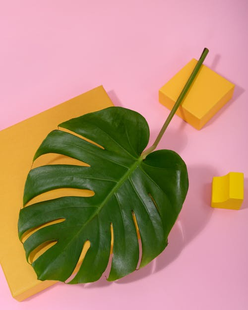 Photo of Monstera Leaf on Top of Square Table