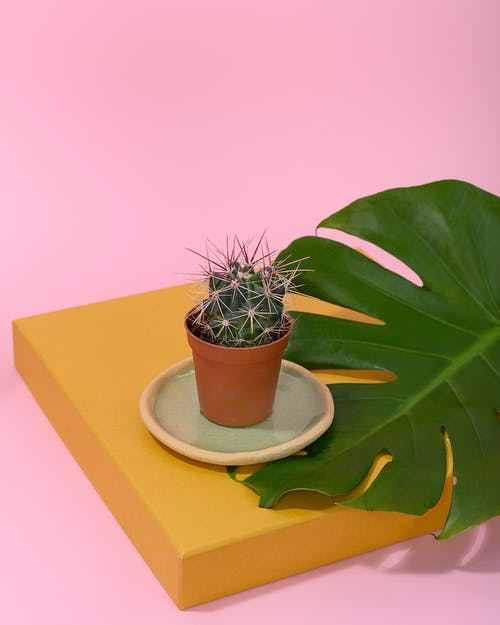 Photo of Cactus Plant on Top of Monstera Leaf