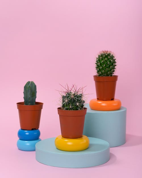 Photo of Cactus Plants on Round Table