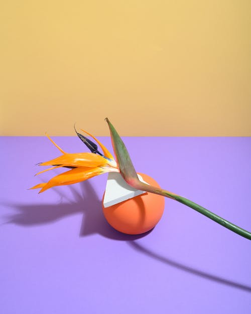 Photo of Flower Leaning at Orange Ball