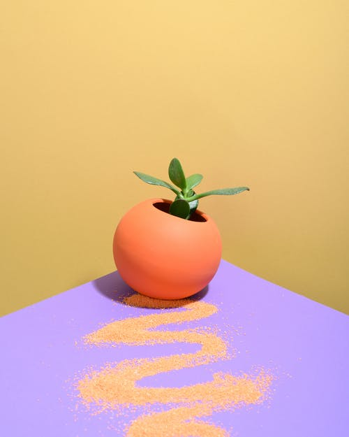 Photo of Plant in a Ball-Shaped Vase