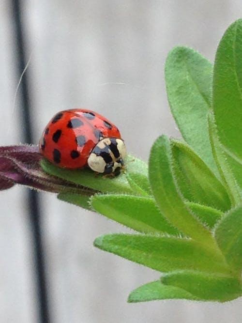 uğur böceği içeren Ücretsiz stok fotoğraf
