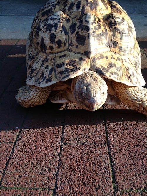 kaplumbağa içeren Ücretsiz stok fotoğraf