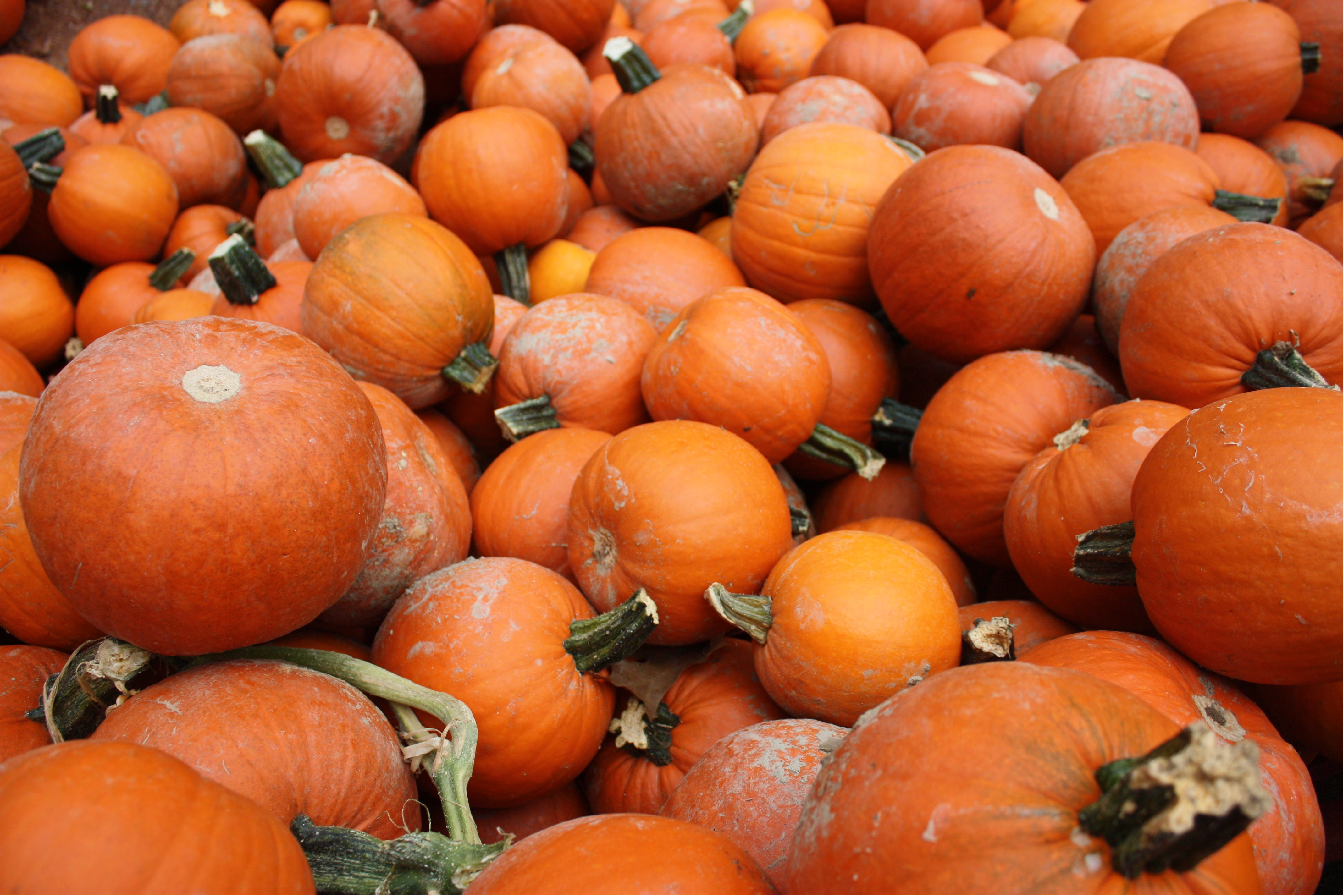Photography of Pile of Pumpkins