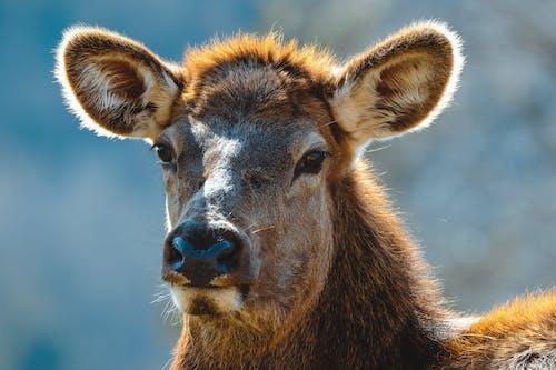 A Close-Up Photo of a Deer