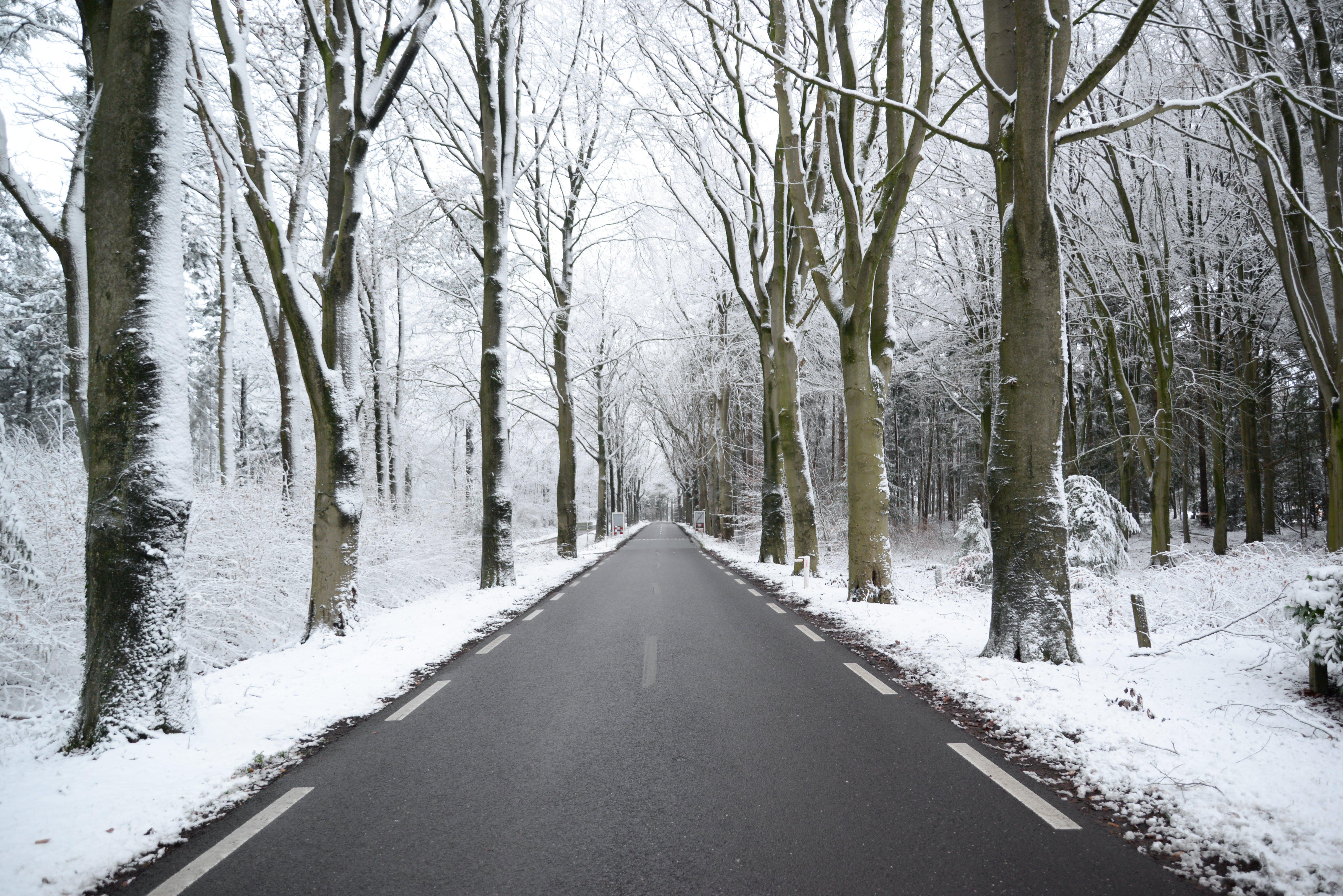 Photos gratuites de arbres, asphalte, branches, brume