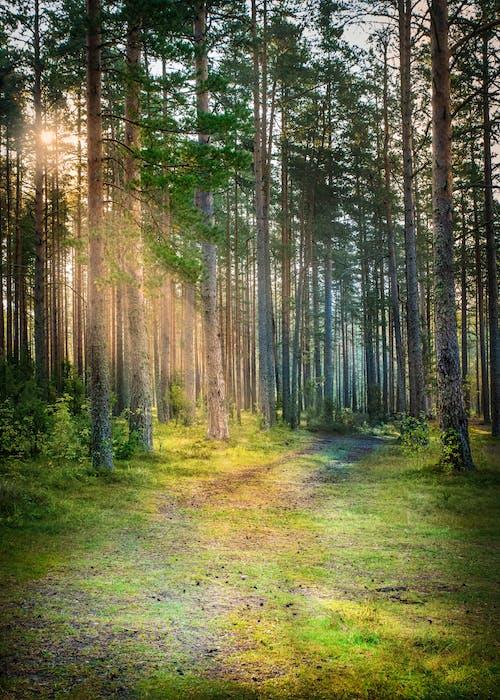 Photos gratuites de arbres, bois, environnement