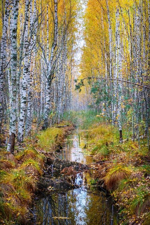 Ingyenes stockfotó erdő, erdőség, esés témában
