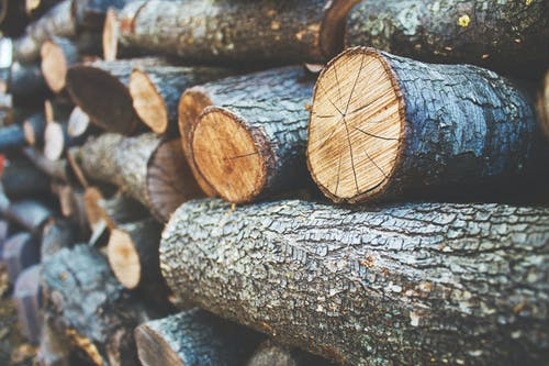 Stacks of Wooden Logs