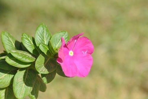 คลังภาพถ่ายฟรี ของ blurres, ธรรมชาติ, ม่วง, สีม่วง