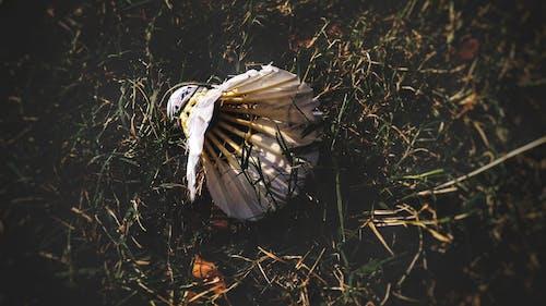 badminton, badminton topu, çim, çim saha içeren Ücretsiz stok fotoğraf