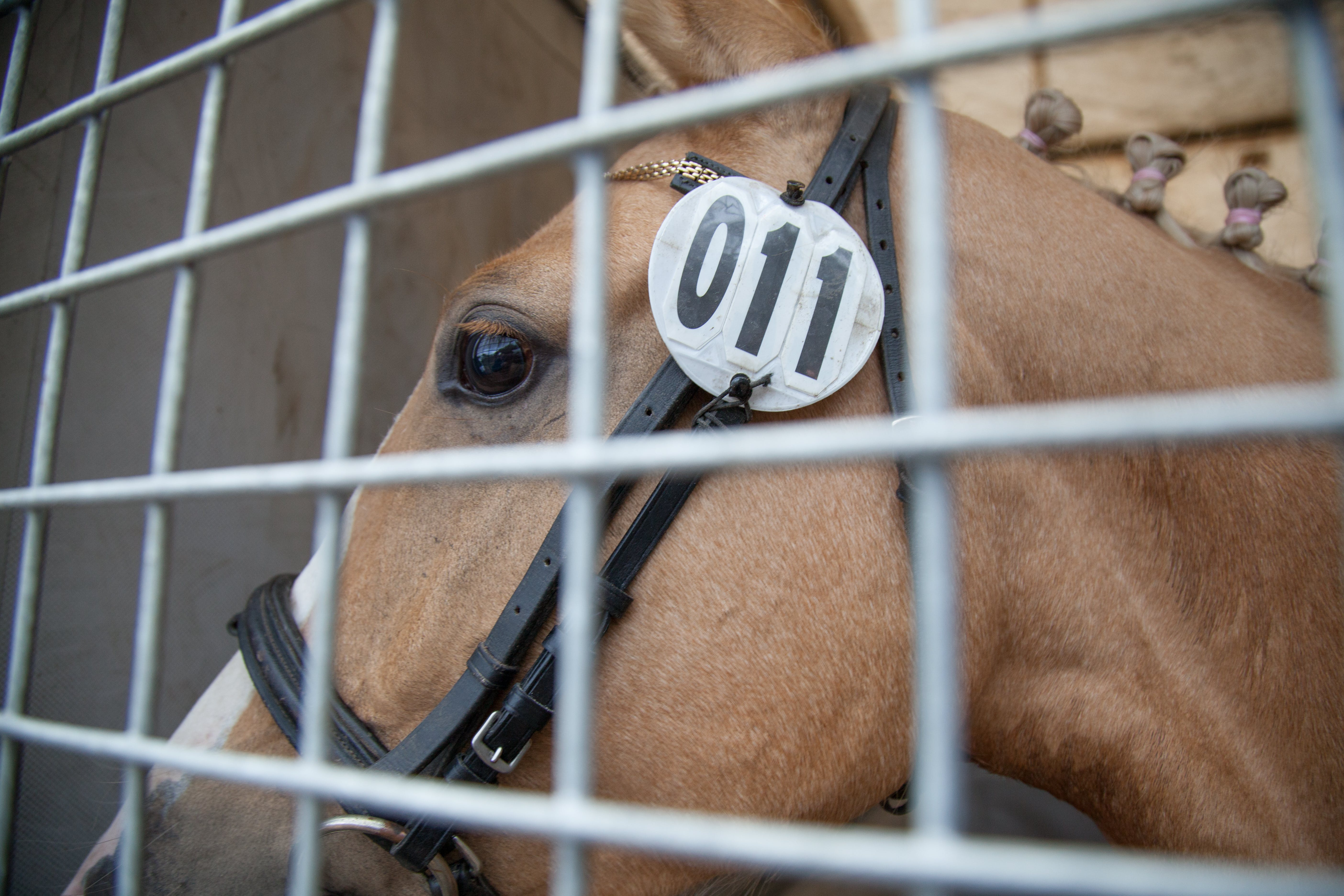 Close-up Photography of Horse