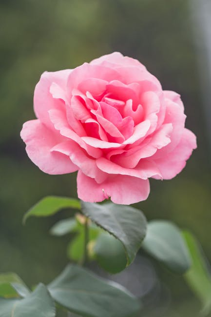 Flor flower garden jkakaroto