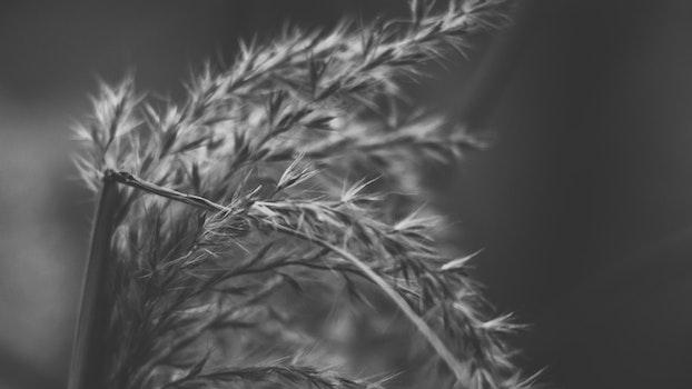 Kostenloses Stock Foto zu dämmerung, natur, sommer, kurve