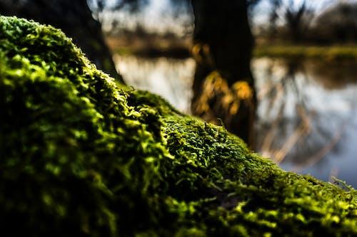 Gratis lagerfoto af flora, fokus, græs, landskab