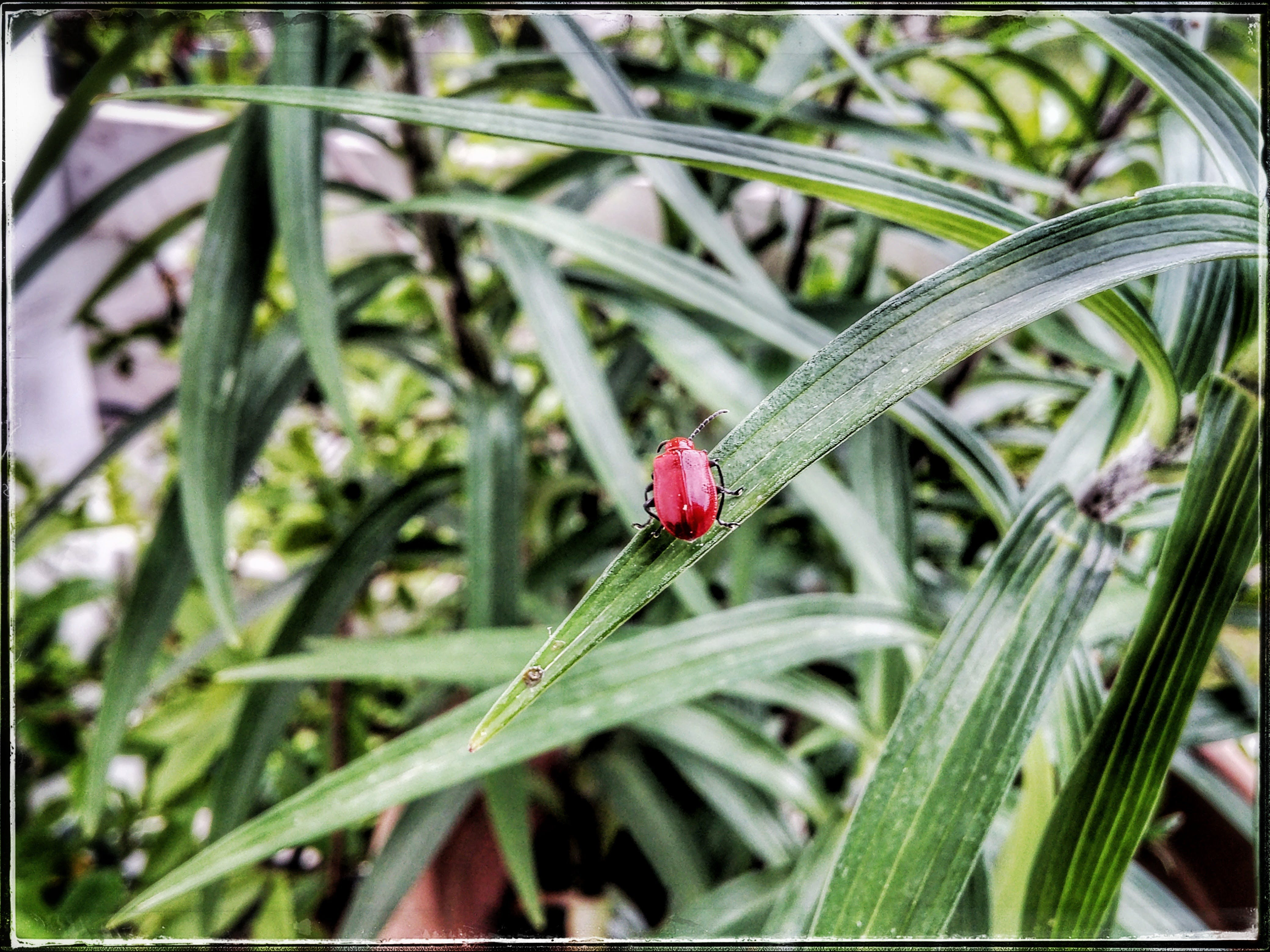 Free stock photo of bug, green, green leaf, red