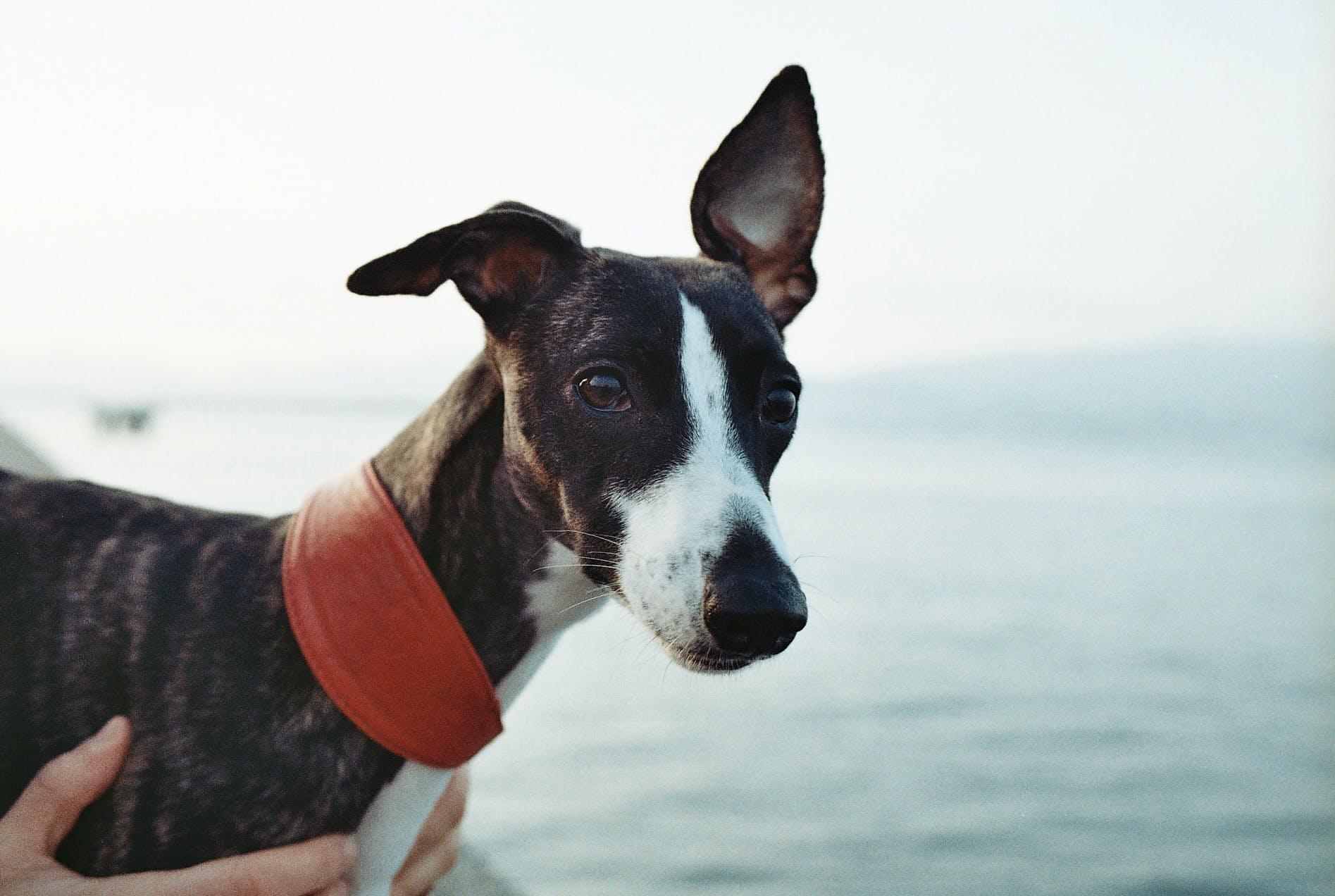 Foto profissional grátis de animal, animal de estimação, aventura, cachorro