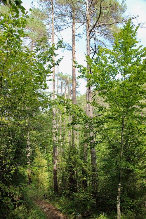 Foto profissional grátis de ao ar livre, arbustos, árvores altas