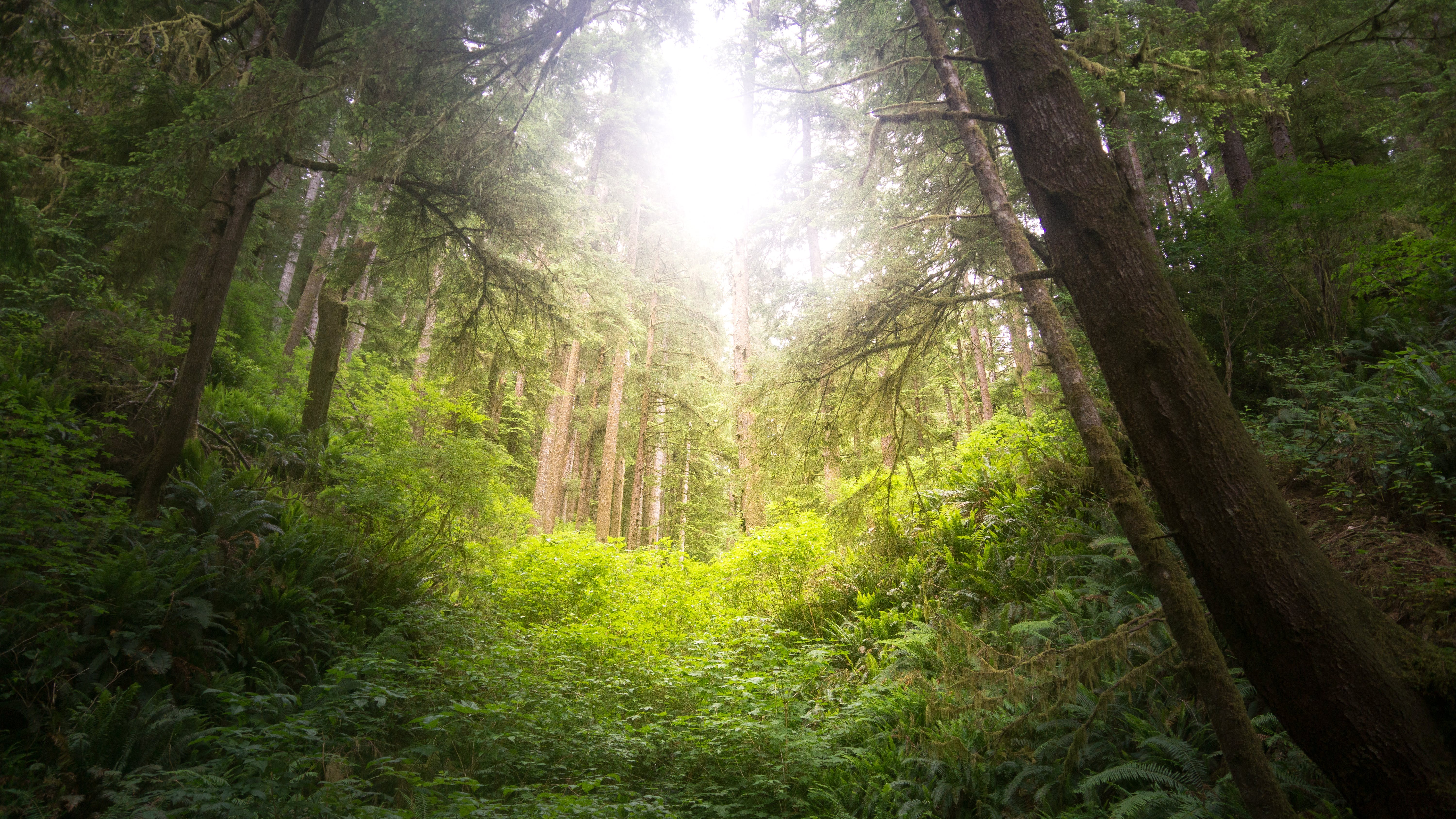 Free stock photo of forest, oregon, pacific northwest, rain forest
