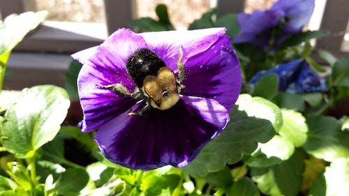 꿀벌, 매크로, 벌, 보라색의 무료 스톡 사진
