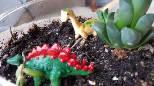 공룡, 다육식물, 땅, 장난감의 무료 스톡 사진