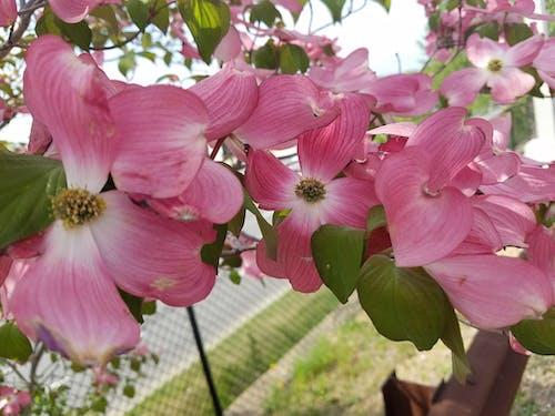 벚꽃, 태양의 무료 스톡 사진