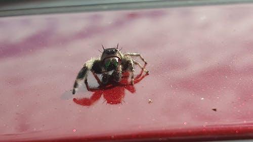 거미, 깡충거미의 무료 스톡 사진