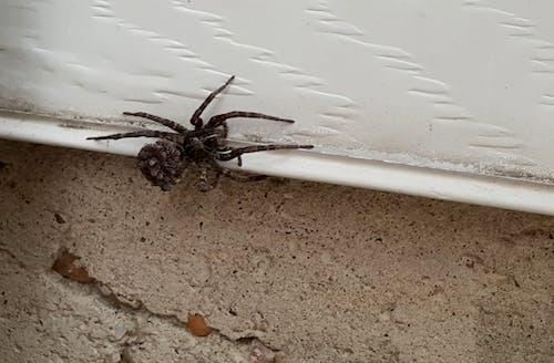 거미, 늑대 거미, 아기 거미의 무료 스톡 사진