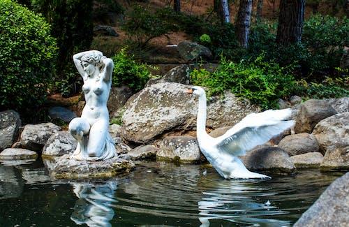 A Swan in a Pond in Crimea