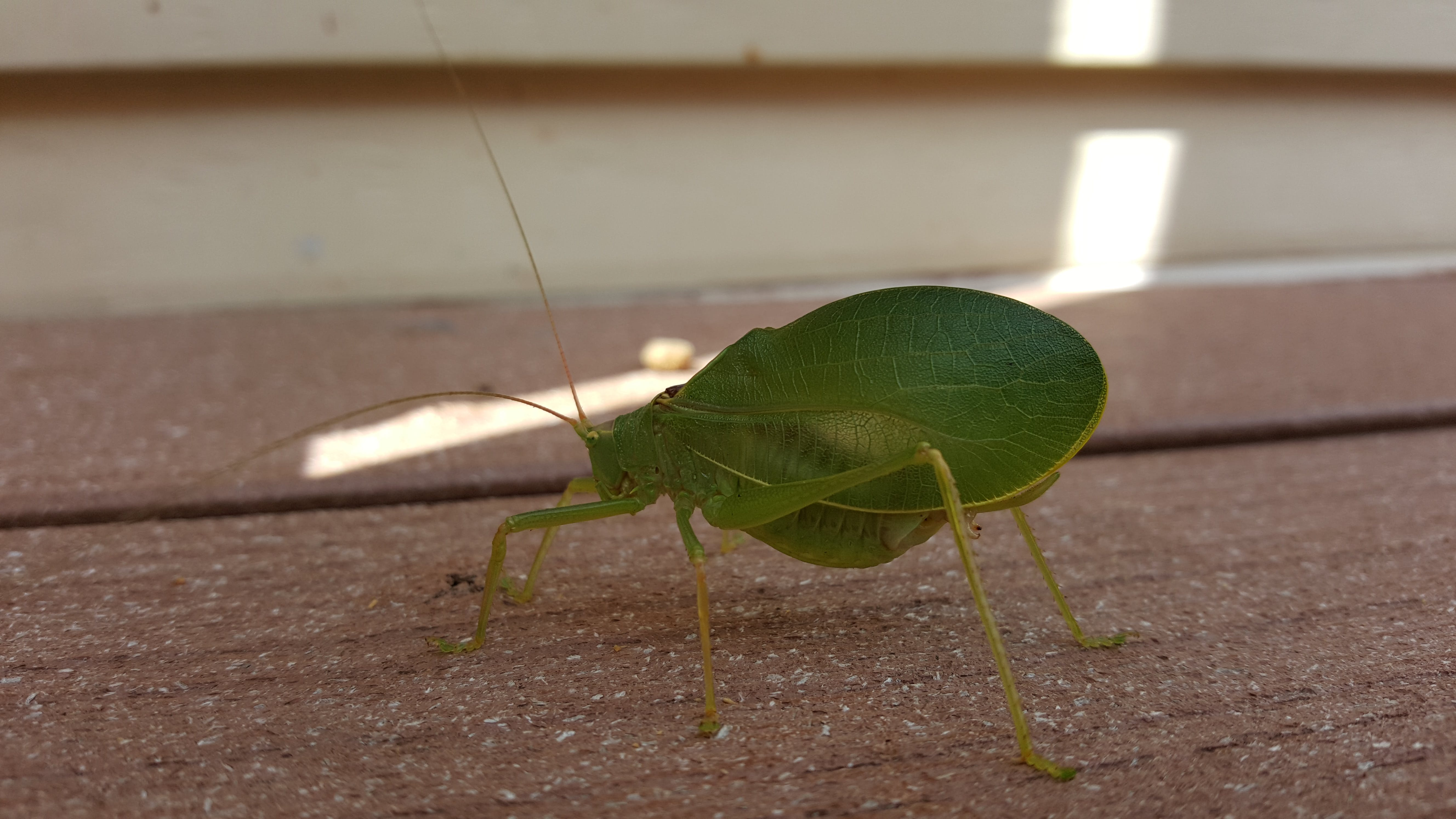 Free stock photo of bug, leaf cutter