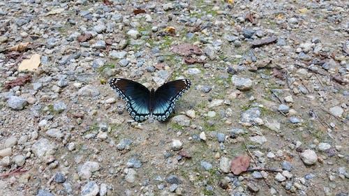 나비의 무료 스톡 사진
