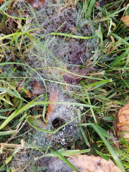 거미줄, 잔디의 무료 스톡 사진