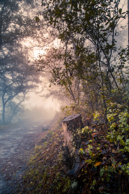 Free stock photo of fog, nature, road