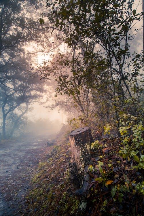 Foto profissional grátis de estrada, natureza, neblina