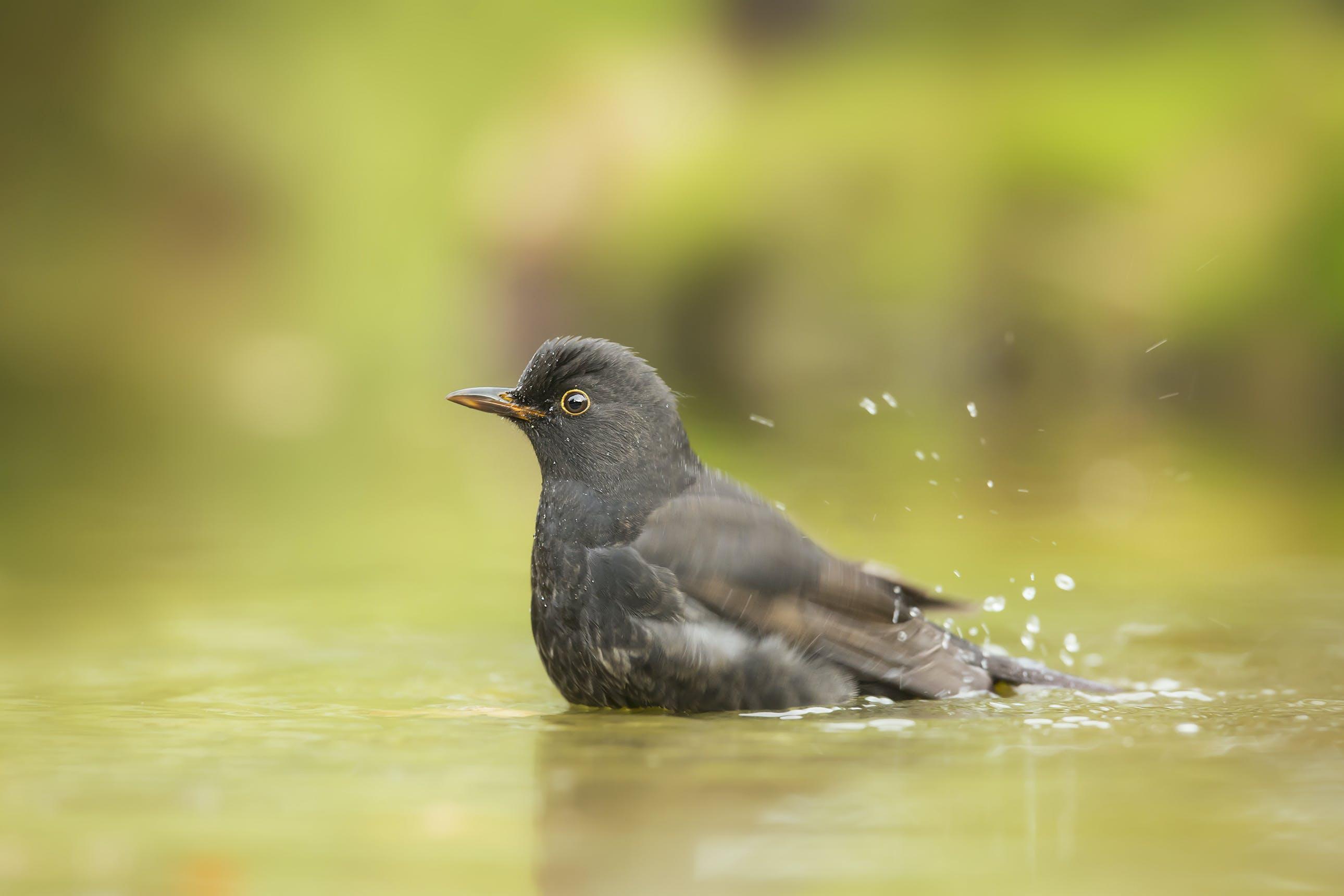 Close Up Photo of Gray Bird