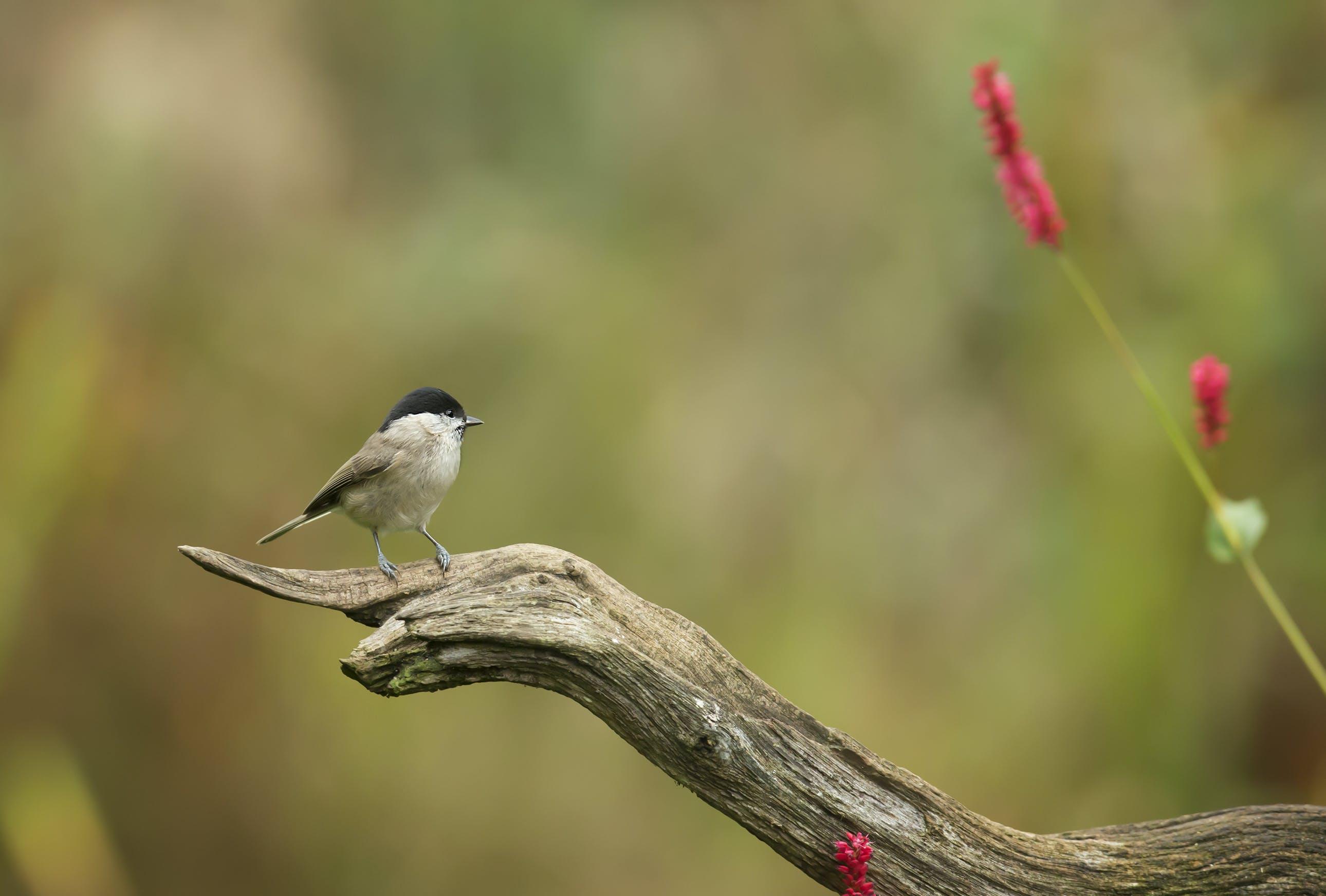 Kostenloses Stock Foto zu holz, natur, vogel, blumen